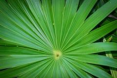 Реальная тропическая предпосылка листьев, листва джунглей Стоковая Фотография RF