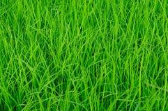 Реальное blackgroud зеленой травы Стоковое фото RF