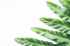 Реальные тропические предпосылки листьев на белизне Ботаническая концепция природы Стоковая Фотография RF