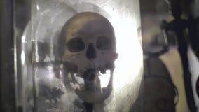 Реальный человеческий череп