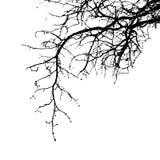Реалистическая иллюстрация вектора силуэта ветвей дерева EPS10 стоковое изображение