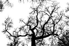 Реалистическая иллюстрация вектора силуэта дерева EPS10 Стоковая Фотография RF