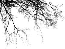 Реалистическая иллюстрация вектора силуэта дерева EPS10 Стоковые Изображения RF