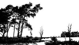 Реалистическая иллюстрация вектора силуэта дерева EPS10 Стоковая Фотография