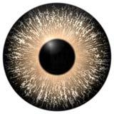 Реалистическая иллюстрация глаза Стоковые Фото