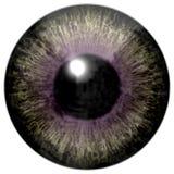Реалистическая красочная текстура радужки глаза Стоковое Фото
