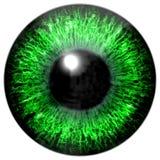 Реалистическая красочная текстура радужки глаза Стоковые Изображения