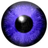Реалистическая красочная текстура радужки глаза Стоковое Изображение