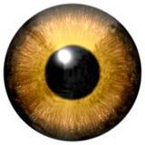 Реалистическая красочная текстура радужки глаза Стоковое Изображение RF