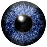 Реалистическая красочная текстура радужки глаза Стоковая Фотография