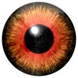 Реалистическая красочная текстура радужки глаза Стоковая Фотография RF