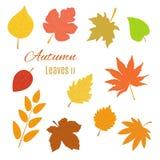 Реалистические листья осени Стоковое Изображение RF