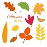 Реалистические листья осени Стоковые Фото