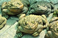 Реалистические скульптуры лягушки Стоковая Фотография