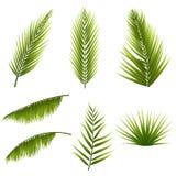 Реалистические тропические зеленые листья ладони установили изолированный на белой предпосылке Экзотическая флора джунглей иконы  Стоковые Изображения