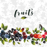 Реалистические ягоды на белой абстрактной предпосылке Стоковая Фотография