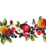 Реалистические ягоды на белой предпосылке Стоковые Изображения RF