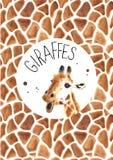 Реалистический жираф акварели Стоковое Фото