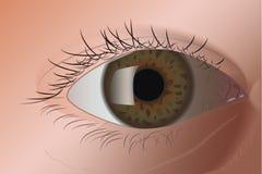 Реалистический зеленый глаз Стоковые Изображения RF
