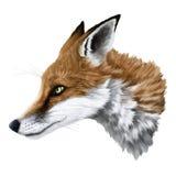 Реалистический портрет лисы Стоковое фото RF
