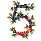 5 реалистических ягод Стоковые Изображения RF