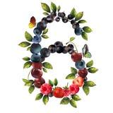 6 реалистических ягод Стоковое Изображение RF