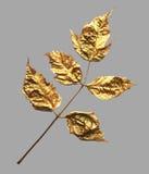 Реалистическое ультрамодное покрашенное золото выходит для дизайна приглашения бесплатная иллюстрация