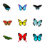 Реалистическое Lexias, Archippus, Morpho Hecuba и другие элементы вектора Комплект символов бабочки реалистических Стоковые Изображения RF