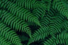 Реальная тропическая предпосылка листьев, листва джунглей Стоковое фото RF