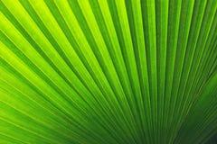 Реальная тропическая предпосылка листьев, листва джунглей Стоковые Фото
