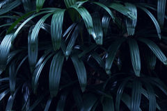 Реальная тропическая предпосылка листьев, листва джунглей Стоковые Изображения