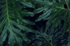 Реальная тропическая предпосылка листьев, листва джунглей Стоковые Изображения RF