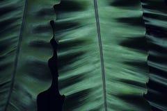 Реальная тропическая предпосылка листьев, листва джунглей Стоковое Изображение RF