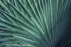 Реальная тропическая предпосылка листьев, листва джунглей Стоковые Фотографии RF
