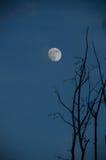 Реальная луна в небе, выравниваясь стоковое фото