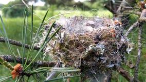 Реальное гнездо птицы опорожняет на ветвях дерева Стоковая Фотография RF