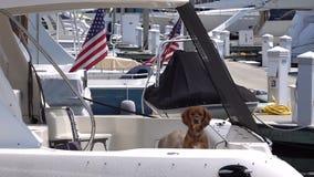 Реальные предохранители 2 смешных собаки на американской шлюпке сток-видео