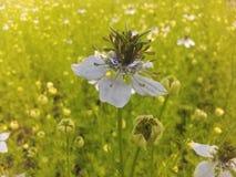 реальный цветок в поле стоковая фотография rf