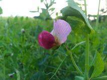 реальный цветок в поле стоковое фото