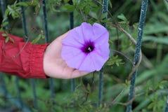 Ребенк держа цветок в руке стоковые изображения