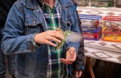 Ребенк держа длиннохвостый попугая в птицах блошинного стоит Стоковое Изображение RF