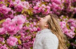 Ребенк на розовых цветках предпосылки дерева Сакуры t Ребенк наслаждаясь вишневым цветом Сакурой Цветки как мягкий пинк стоковые фото
