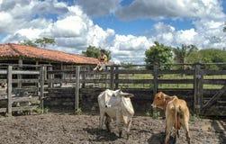 Ребенок бразильской фермы Стоковая Фотография RF