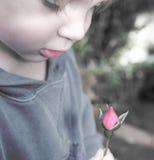 ребенок бутона поднял Стоковые Изображения RF