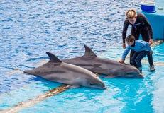 Ребенок в близком знакомстве с дельфинами стоковые фотографии rf