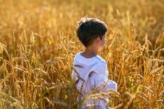 Ребенок в поле пшеницы Стоковые Фото