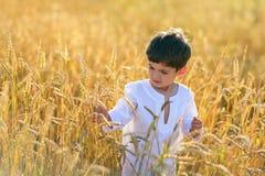 Ребенок в поле пшеницы Стоковое Изображение