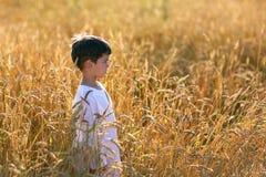 Ребенок в поле пшеницы Стоковые Фотографии RF