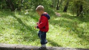 Ребенок гуляя в парк осени Мальчик идет на упаденное дерево акции видеоматериалы