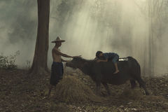 Ребенок лежа на задней части буйвола Стоковое фото RF